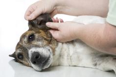 Erste Hilfe am Hund Norderstedt