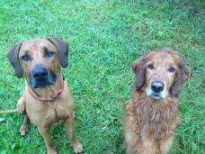 Hundeerziehung Norderstedt